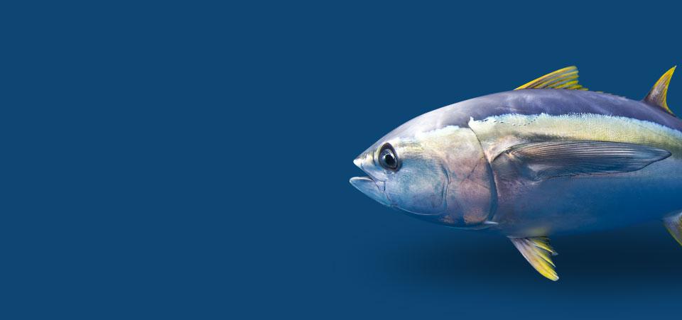 Intan Seafood Banner Pelagic Fish
